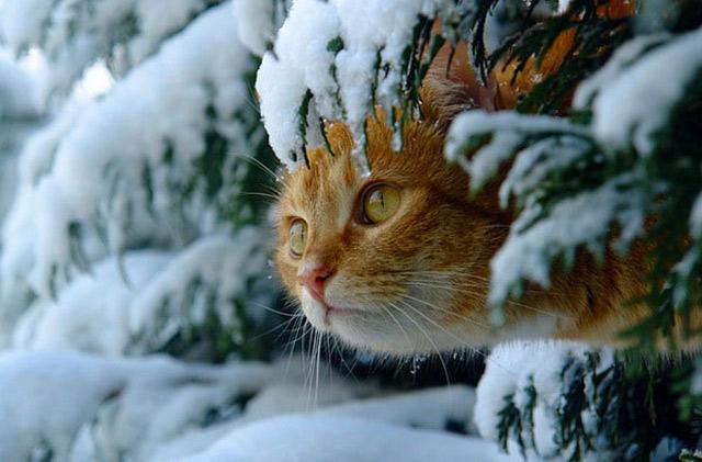Những đôi mắt tròn xoe của bé mèo xinh   meo xinh   dang yeu (13)