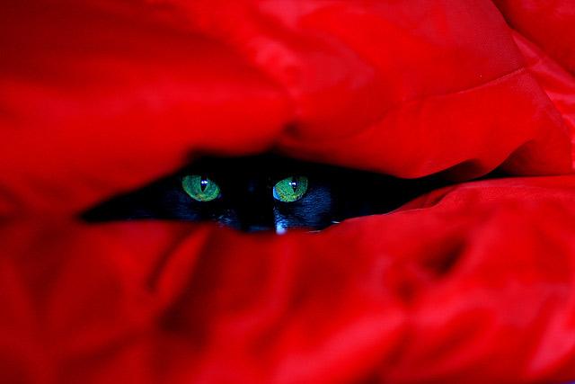 Những đôi mắt tròn xoe của bé mèo xinh   meo xinh   dang yeu (11)
