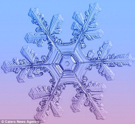 Ngắm nhìn những bông tuyết kết tinh tuyệt đẹp | Timofey Cherepanov, bong tuyet, ket tinh, anh dep bong tuyet, anh dep, (7)