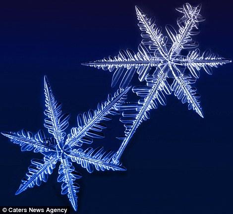 Ngắm nhìn những bông tuyết kết tinh tuyệt đẹp | Timofey Cherepanov, bong tuyet, ket tinh, anh dep bong tuyet, anh dep, (6)