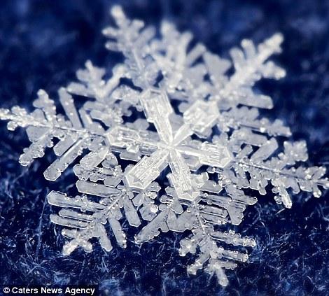 Ngắm nhìn những bông tuyết kết tinh tuyệt đẹp | Timofey Cherepanov, bong tuyet, ket tinh, anh dep bong tuyet, anh dep, (5)
