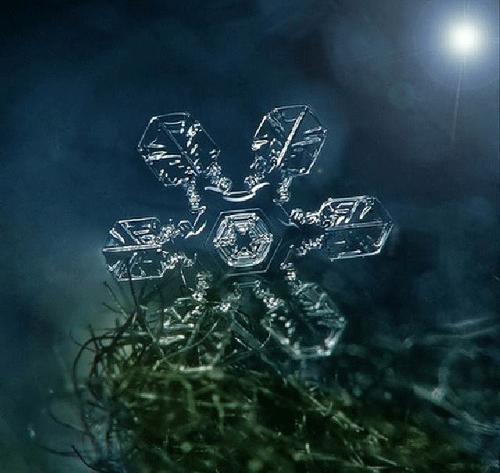 Ngắm nhìn những bông tuyết kết tinh tuyệt đẹp | Timofey Cherepanov, bong tuyet, ket tinh, anh dep bong tuyet, anh dep, (2)