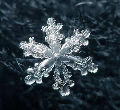 Ngắm nhìn những bông tuyết kết tinh tuyệt đẹp | Timofey Cherepanov, bong tuyet, ket tinh, anh dep bong tuyet, anh dep, (15)