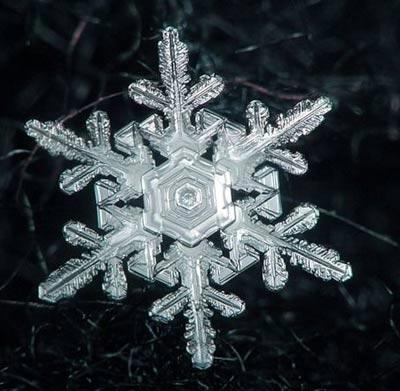 Ngắm nhìn những bông tuyết kết tinh tuyệt đẹp | Timofey Cherepanov, bong tuyet, ket tinh, anh dep bong tuyet, anh dep, (14)