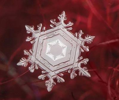 Ngắm nhìn những bông tuyết kết tinh tuyệt đẹp | Timofey Cherepanov, bong tuyet, ket tinh, anh dep bong tuyet, anh dep, (10)