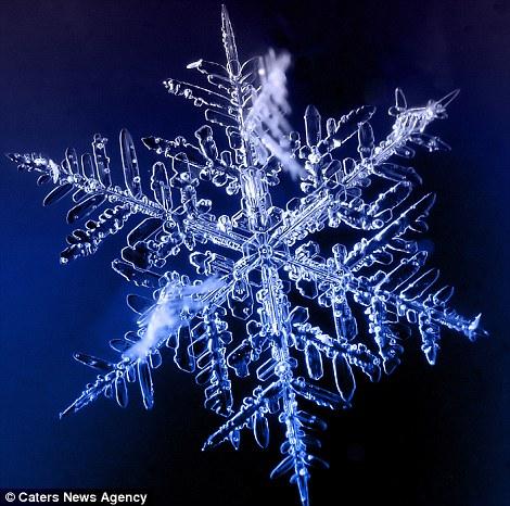Ngắm nhìn những bông tuyết kết tinh tuyệt đẹp | Timofey Cherepanov, bong tuyet, ket tinh, anh dep bong tuyet, anh dep, (8)