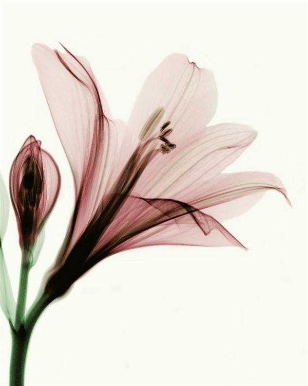 Những bông hoa trong suốt kỳ diệu | (1)