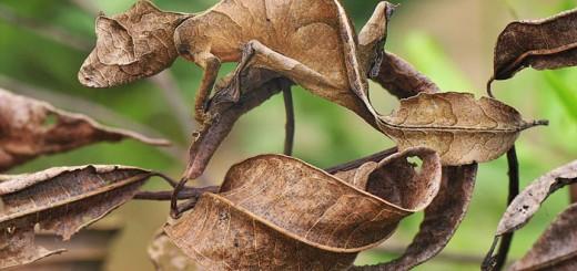 Những bậc thầy ngụy trang trong thế giới tự nhiên