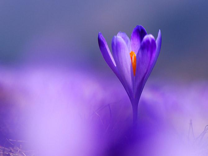 Thiên nhiên đẹp ngỡ ngàng qua ống kính của Janez Tolar | Photography (4)