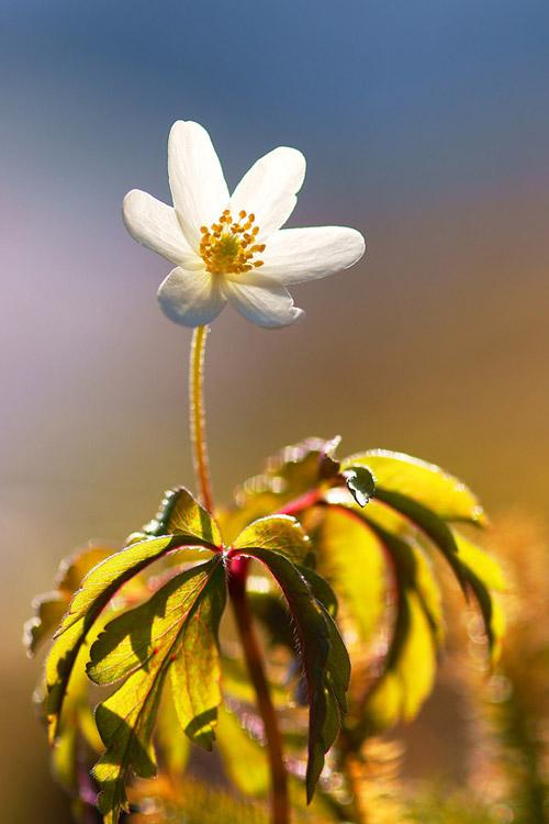 Thiên nhiên đẹp ngỡ ngàng qua ống kính của Janez Tolar | Photography (1)