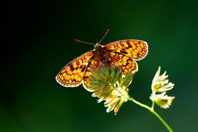Thiên nhiên đẹp ngỡ ngàng qua ống kính của Janez Tolar | Photography (11)