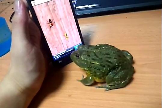 Hài hước chú ếch biết... chơi game