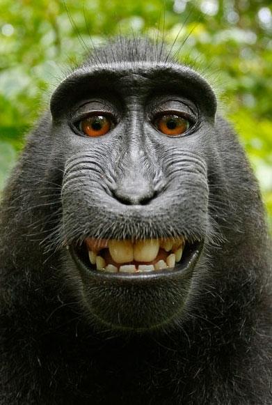 Khoảnh khắc hài hước của động vật (12)