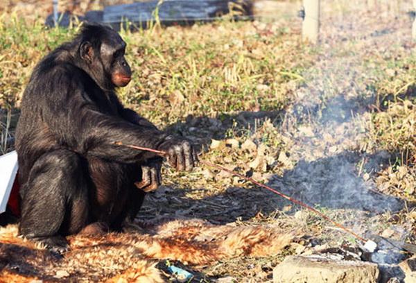 Chú tinh tinh biết nấu nướng như con người