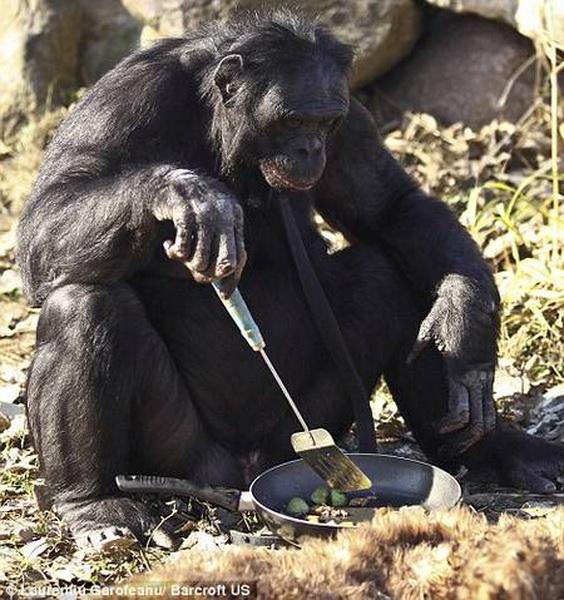 Chú tinh tinh biết nấu ăn như người (6)