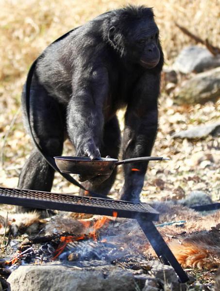 Chú tinh tinh biết nấu ăn như người (5)