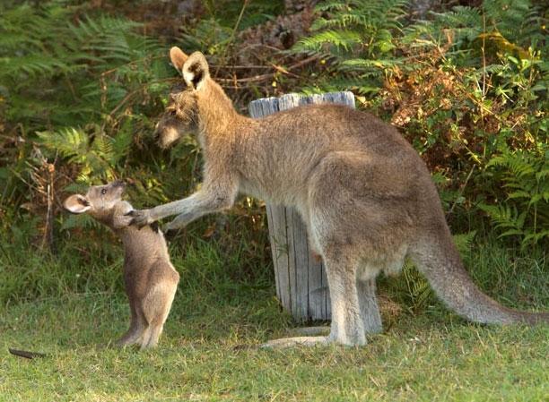 Khoảnh khắc hài hước của động vật