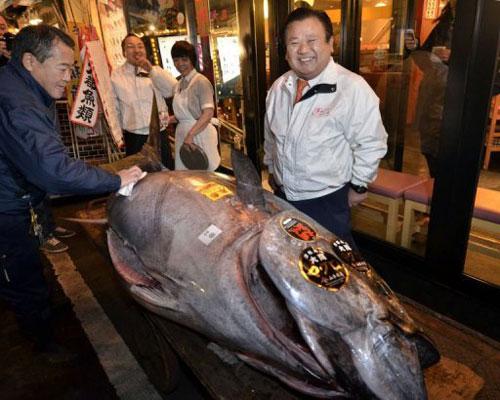Con cá ngừ được bán với giá 736.000 USD.