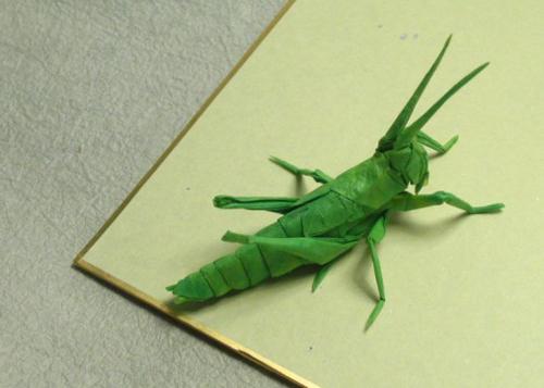 Bộ sưu tập côn trùng độc đáo bằng... giấy (9)