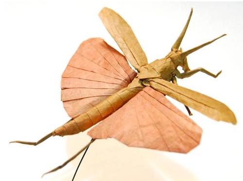 Bộ sưu tập côn trùng độc đáo bằng... giấy (8)