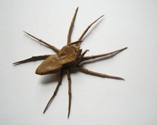 Bộ sưu tập côn trùng độc đáo bằng... giấy (5)