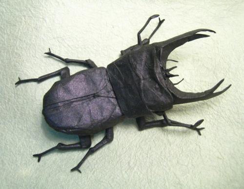 Bộ sưu tập côn trùng độc đáo bằng... giấy (3)