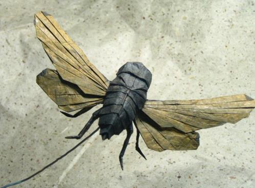 Bộ sưu tập côn trùng độc đáo bằng... giấy (1)