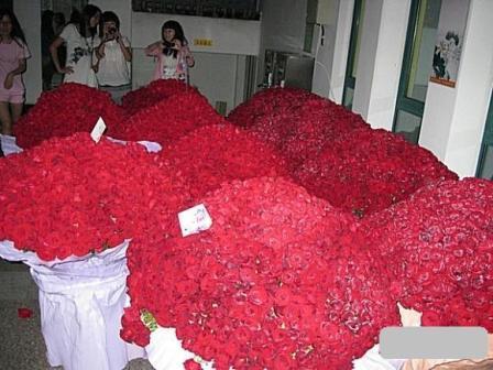 Nữ sinh nhận được 10.000 bông hồng đỏ cho ngày Valentine