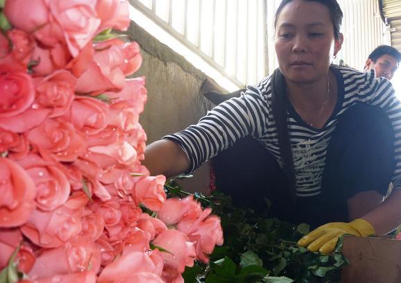 Những ngày vào lễ người trồng hoa Đà Lạt mệt nhưng vui vì bán được giá