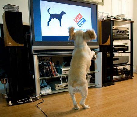 Kênh truyền hình dành riêng cho 'chó'
