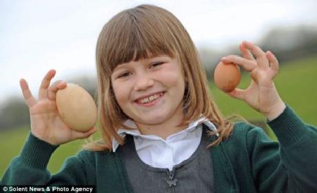 Gà đẻ trứng khủng tại Anh