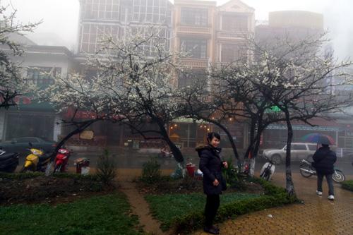 Sapa chìm đắm trong sương mù (8)
