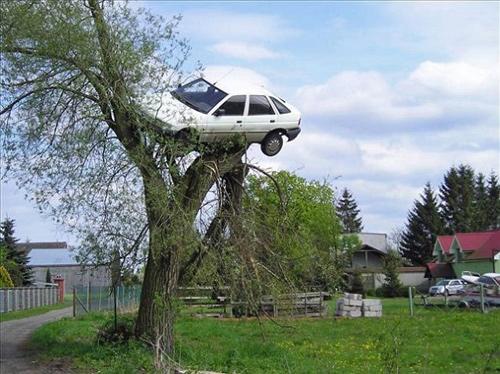 Chiếc xe của Filo bị ai đó treo lên cây liễu