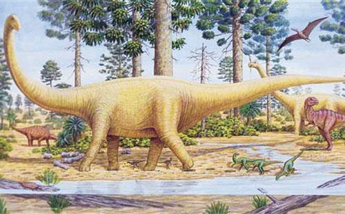 Khủng long sauropod - Ảnh: ABC