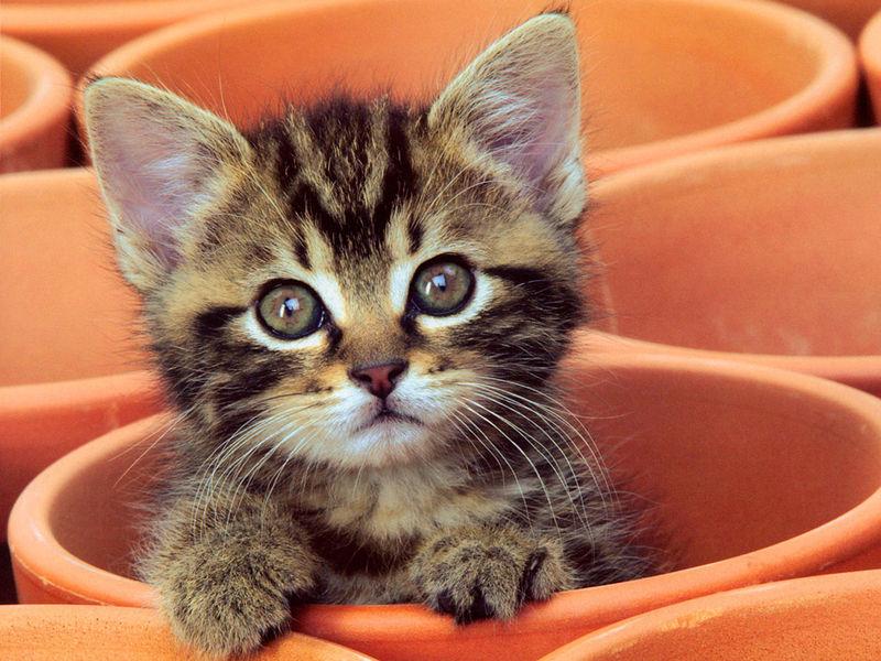 Những chú mèo nhỏ dễ thương | Ảnh mèo dễ thương | mèo xinh (20)