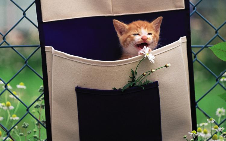 Những chú mèo nhỏ dễ thương | Ảnh mèo dễ thương | mèo xinh (11)