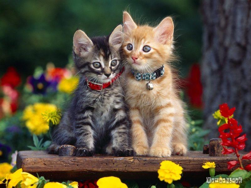 Những chú mèo nhỏ dễ thương | Ảnh mèo dễ thương | mèo xinh (10)