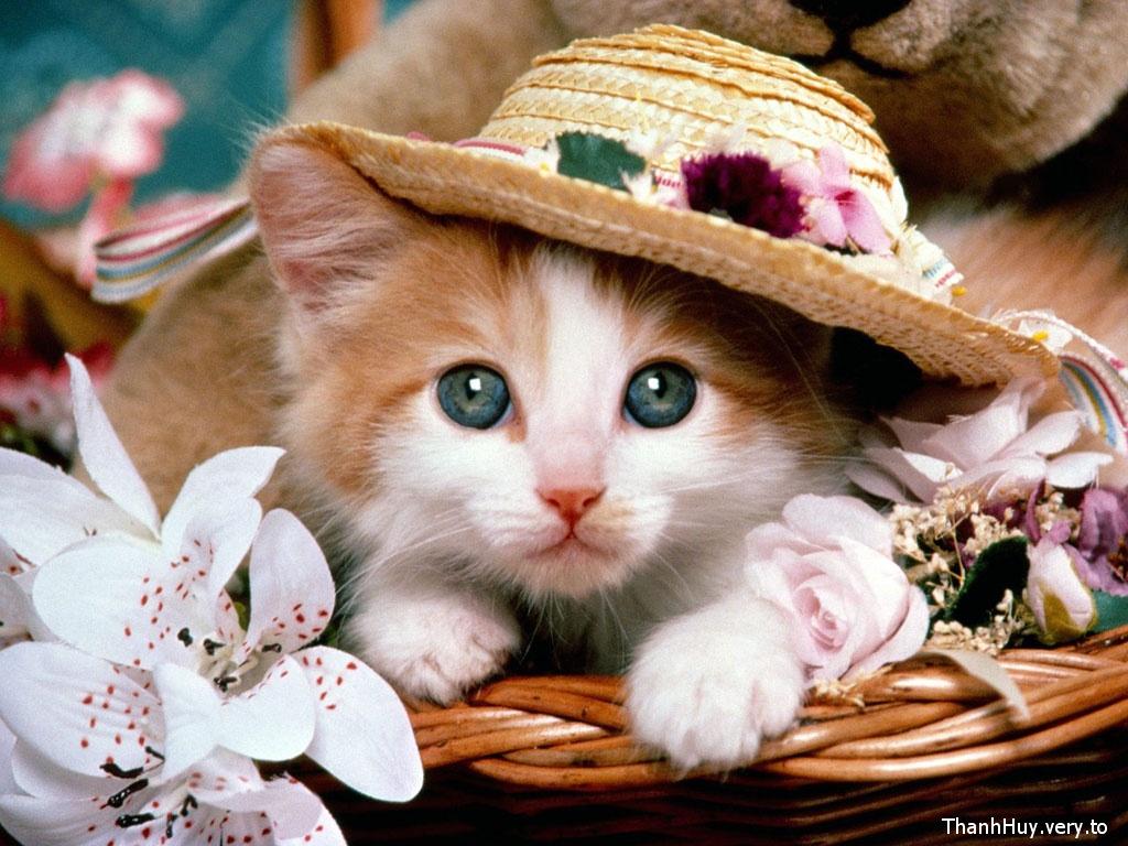 Những chú mèo nhỏ dễ thương | Ảnh mèo dễ thương | mèo xinh (9)