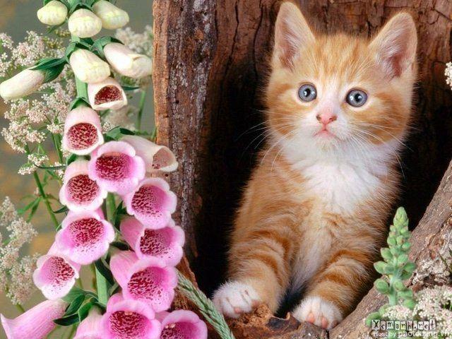 Những chú mèo nhỏ dễ thương | Ảnh mèo dễ thương | mèo xinh (8)