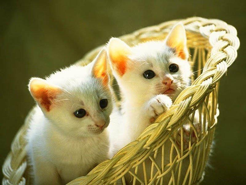 Những chú mèo nhỏ dễ thương | Ảnh mèo dễ thương | mèo xinh (6)