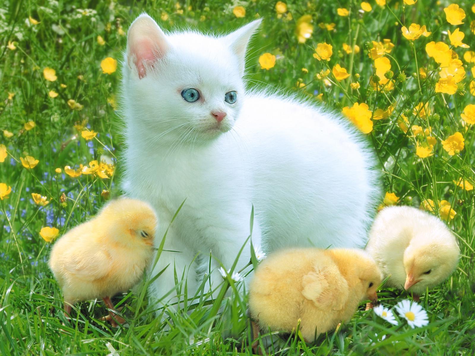Cute Animal Spring Desktop