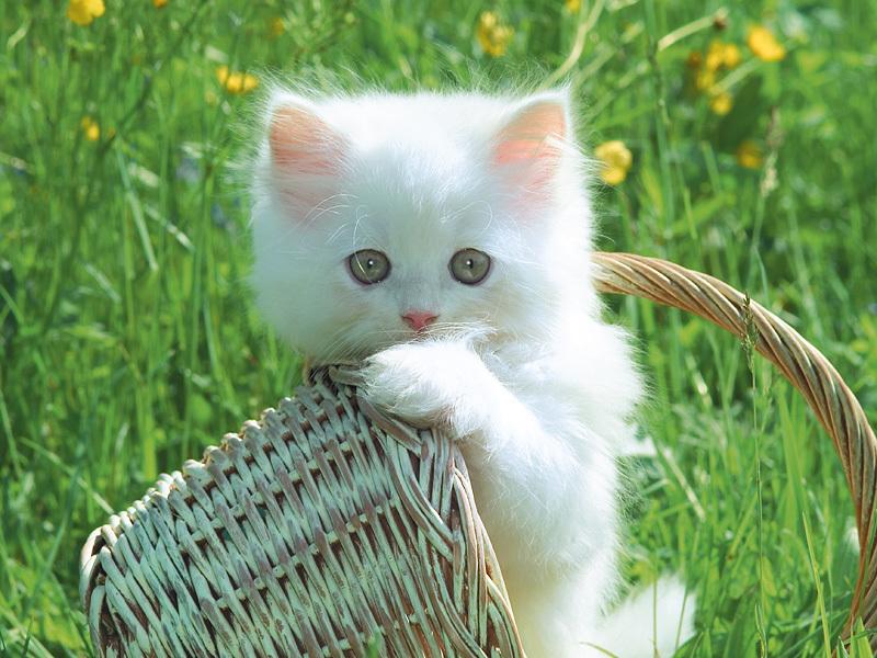 Những chú mèo nhỏ dễ thương | Ảnh mèo dễ thương | mèo xinh (3)