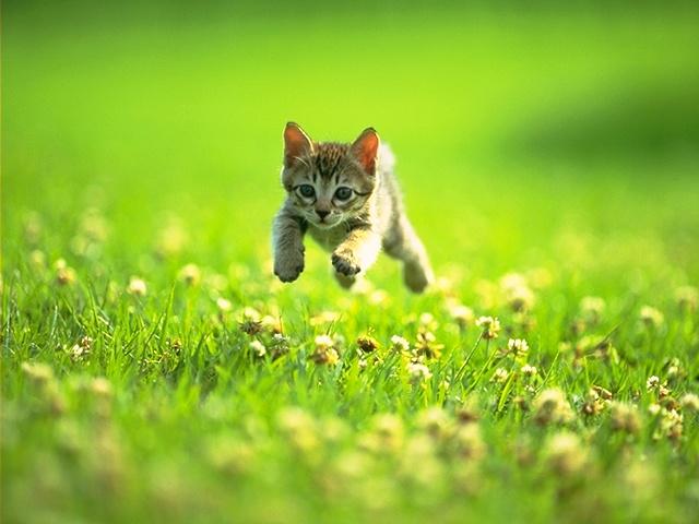 Những chú mèo nhỏ dễ thương | Ảnh mèo dễ thương | mèo xinh (2)