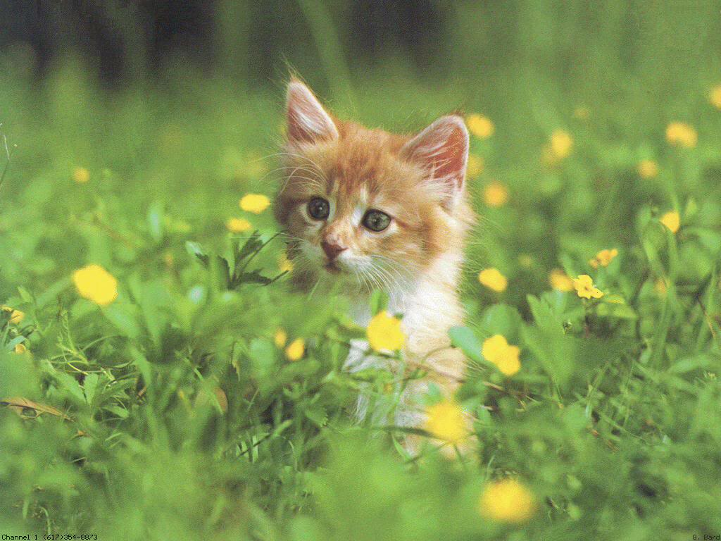 Những chú mèo nhỏ dễ thương | Ảnh mèo dễ thương | mèo xinh (19)