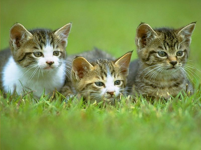 Những chú mèo nhỏ dễ thương | Ảnh mèo dễ thương | mèo xinh (1)