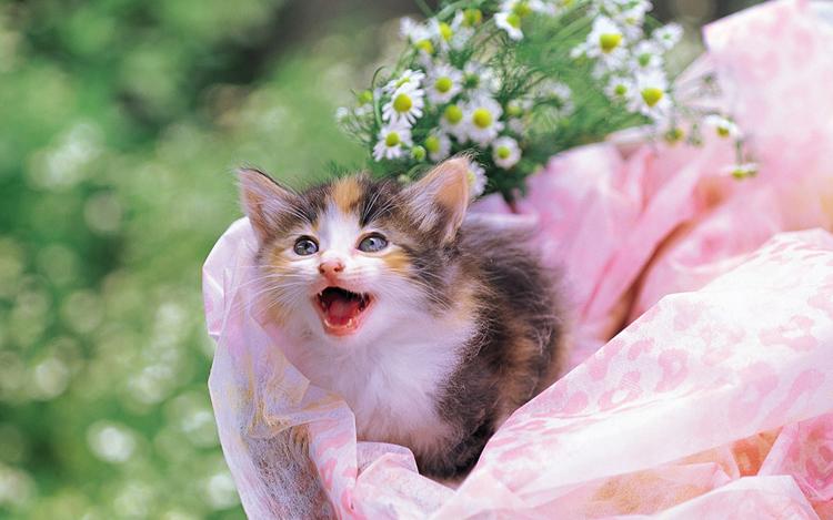 Những chú mèo nhỏ dễ thương | Ảnh mèo dễ thương | mèo xinh (16)
