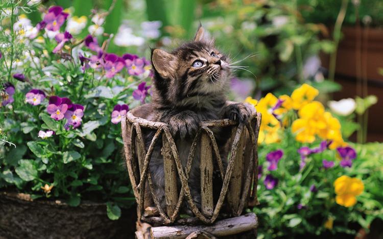 Những chú mèo nhỏ dễ thương | Ảnh mèo dễ thương | mèo xinh (15)
