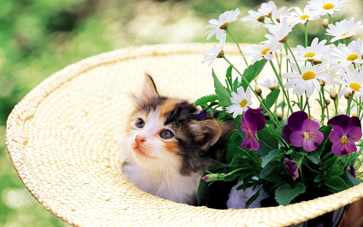 Những chú mèo nhỏ dễ thương | Ảnh mèo dễ thương | mèo xinh (14)