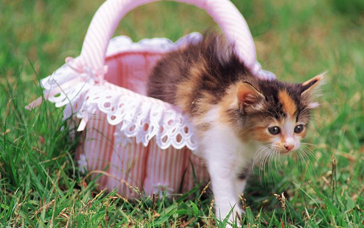 Những chú mèo nhỏ dễ thương | Ảnh mèo dễ thương | mèo xinh (13)