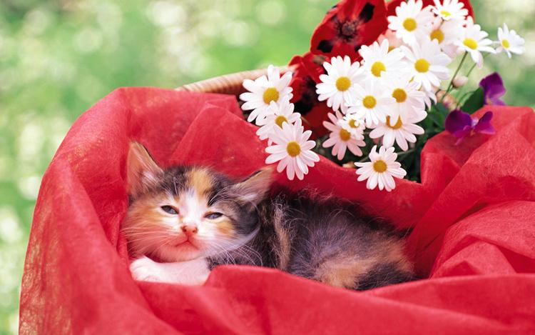 Những chú mèo nhỏ dễ thương | Ảnh mèo dễ thương | mèo xinh (12)
